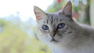 חתול מביט למצלמה